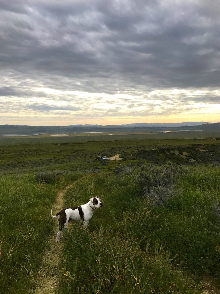Dog Hike Carrizo Plain Superbloom 2017